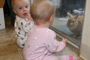 Baby twin girls watching bunny