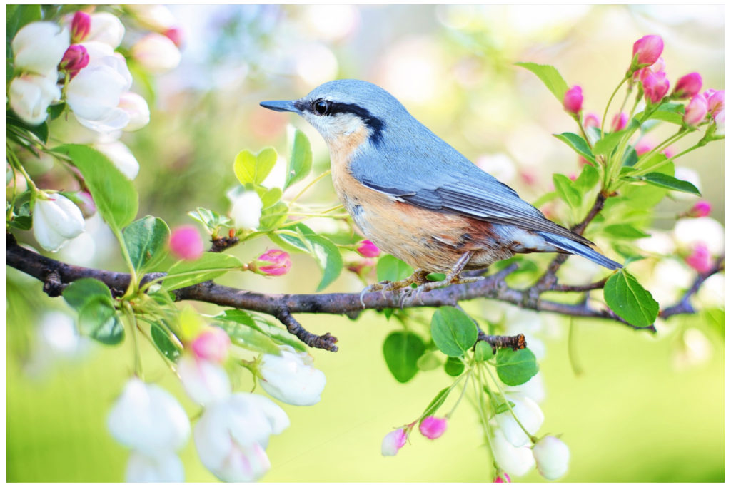 bird on a spring branch