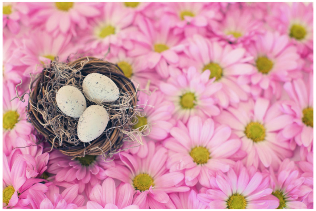 nest of eggs on a background of daisies