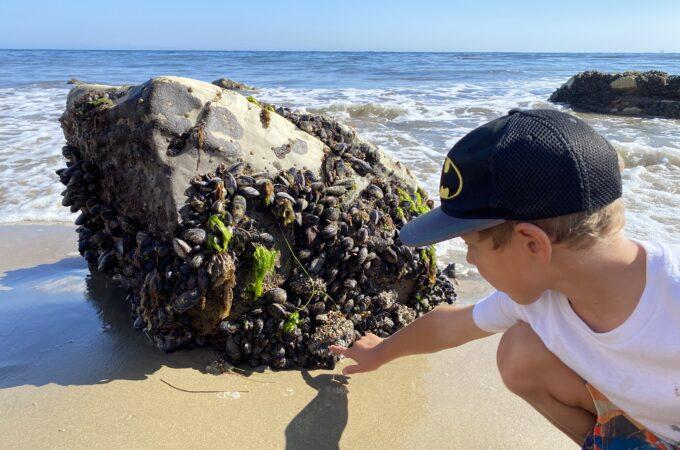 Exploring Tidepools at Refugio State Beach